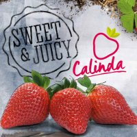 Calinda : news, updates and inspiration